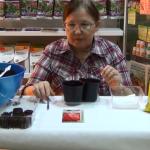 Посев и пикировка перцев-0-01-47-837